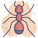 animal, ant, insect, termite