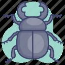 animal, beetle, bug, insect