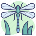 dragonfly, fly, insect, nature