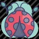bugs, insect, ladybug, nature