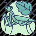 grassshopper, insect, mantis, praying icon