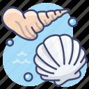 shell, seashells, sea, shells icon
