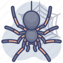 horror, insect, spider, web