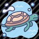 animal, sea, tortoise, turtle