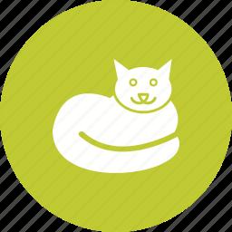 animal, beautiful, cat, cute, domestic, pet icon