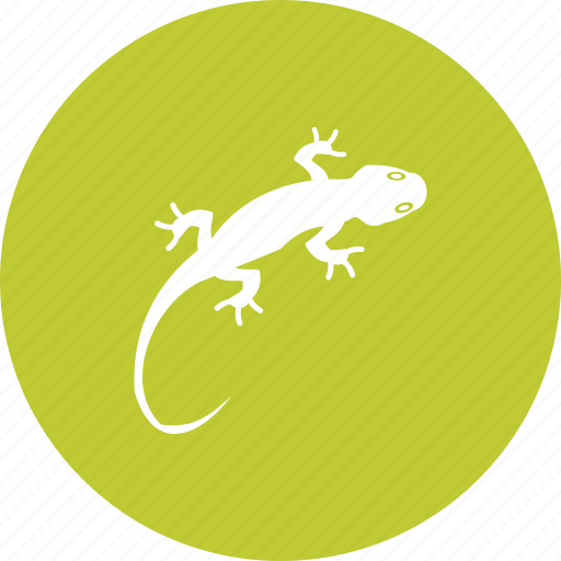 animal, color, lizard, orange, pet, reptile, tail icon