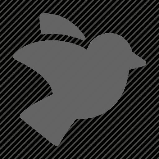 bird, dove, pigeon icon