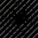cobweb, spider icon