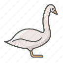animal, farm, swan