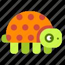 turtle, animal