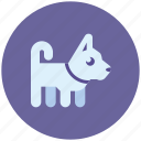 animal, dog, friend, pet icon