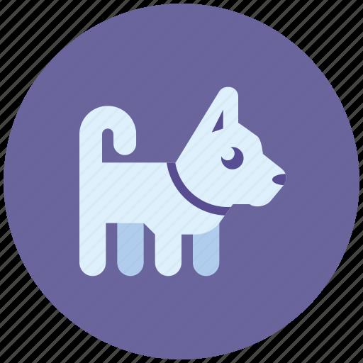 animal, dog, friend, pet icon