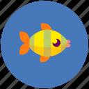 fish, animal