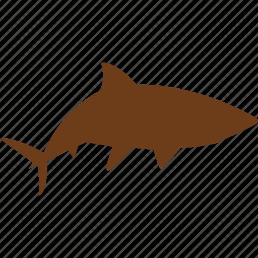 animal, aquatic animals, ocean, sea, shark, ship, tourism icon