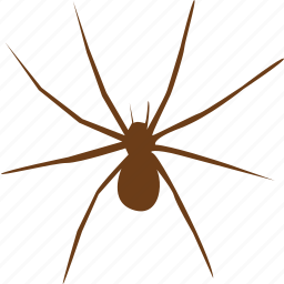 animal, animals, bug, horror, scream, slider, spider icon
