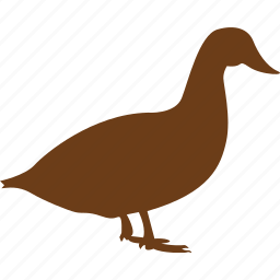 animal, animals, duck, meet, pet, poultry icon