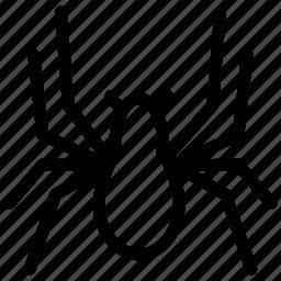 creative, eight-legs, grid, insect, line, shape, spider, spiderweb, venomous icon