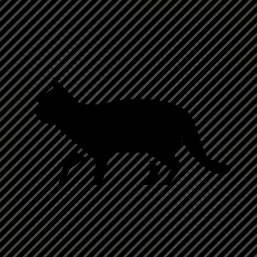 animal, cat, cute, home, pet icon