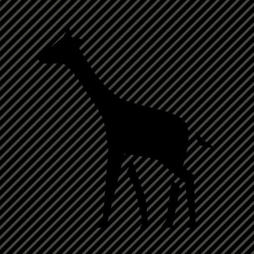 africa, african, animal, giraffe, long, nature, wild icon