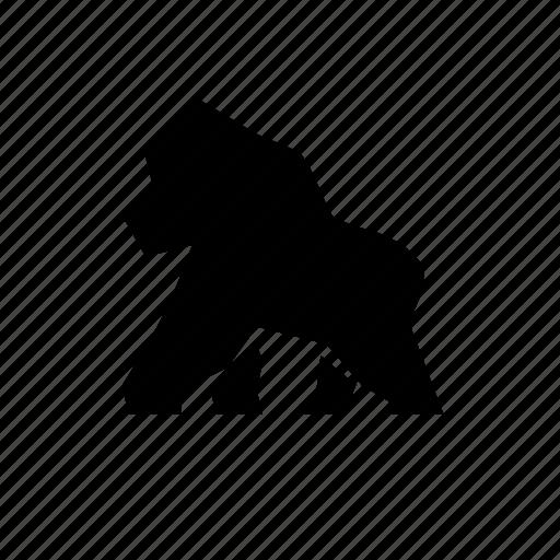 animal, gorilla, jungle, kongo, nature, wild icon