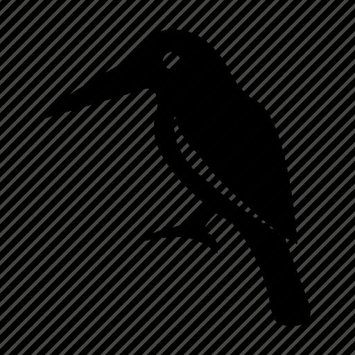 bird, hummingbird, ramphastos, toucan, zoology icon