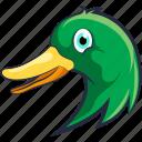 bird, domestic fowl, duck, goose, mallard duck