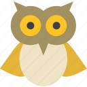 animal, bird, owl