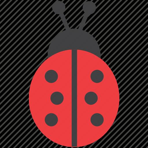 animal, insect, ladybird, ladybug icon