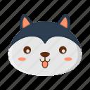 animal, cute, dog, wolf, zoo