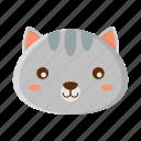 animal, cute, pet, racoon, zoo