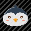 animal, animals, penguin, pet, zoo