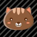 animal, brown, cat, face, pet