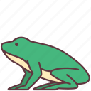 amphibian, animal, creature, frog, wild icon