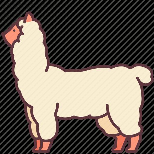 Alpaca, animal, llama, mammal, pet, zoo icon - Download on Iconfinder