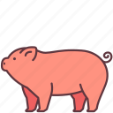 animal, domestic, farm, mammal, pet, pig icon