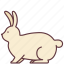 animal, bunny, domestic, pet, rabbit icon