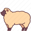 animal, domestic, farm, pet, sheep, zoo icon
