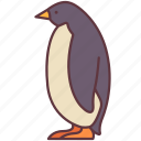 animal, arctic, bird, penguin, poultry, zoo icon
