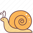 animal, creature, slowly, snail, spiral, winkle icon