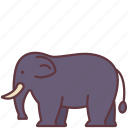 animal, creature, elephant, mammal, wild, zoo icon