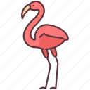 animal, bird, creature, flamingo, poultry, zoo
