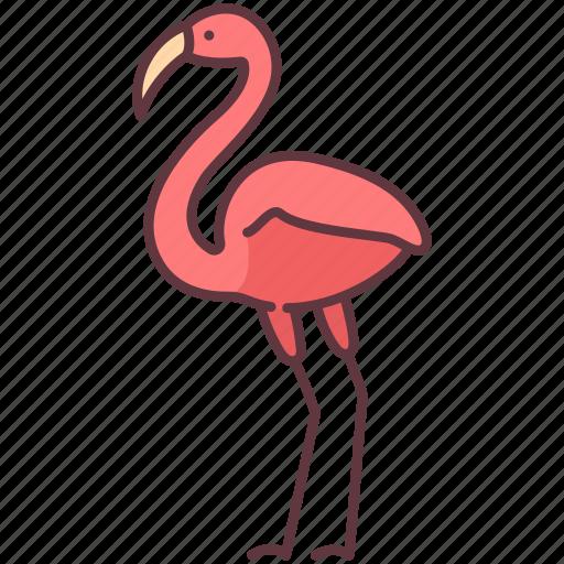 animal, bird, creature, flamingo, poultry, zoo icon