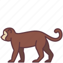 animal, chimpanzee, creature, monkey, wildlife, zoo icon