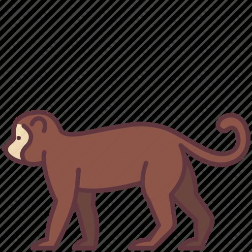 Animal, chimpanzee, creature, monkey, wildlife, zoo icon - Download on Iconfinder