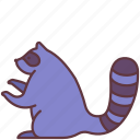 animal, domestic, pet, raccoon, tanuki, zoo icon