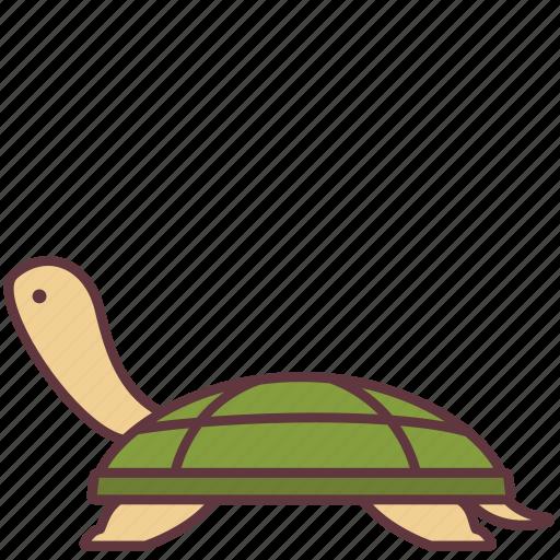Amphibian, animal, domestic, pet, sea, turtle, zoo icon - Download on Iconfinder