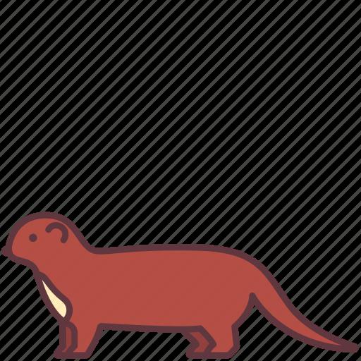 Animal, creature, ferret, mammal, weasel, wild icon - Download on Iconfinder