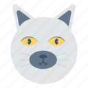 animal, huskydog, pet, puppy, zoo