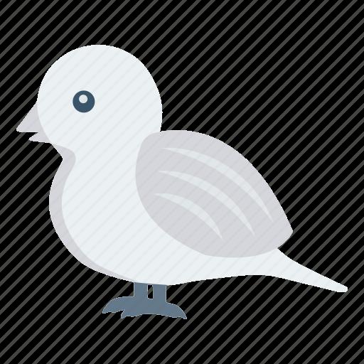 bird, dove, fly, pet, sparrow icon
