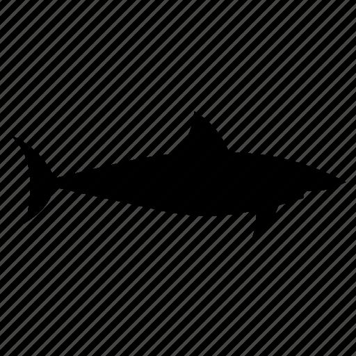 fish, predator, requin, sea, shark, tiburon, tubarao icon